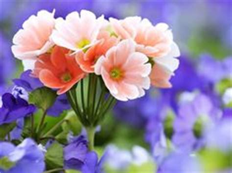 Buket Flanel Bunga Tulisan 20cm 1 cara merangkai buket bunga mawar cara membuat buket bunga wisuda cara merangkai buket bunga