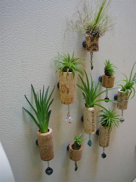 set   unique air plant cork succulent magnet