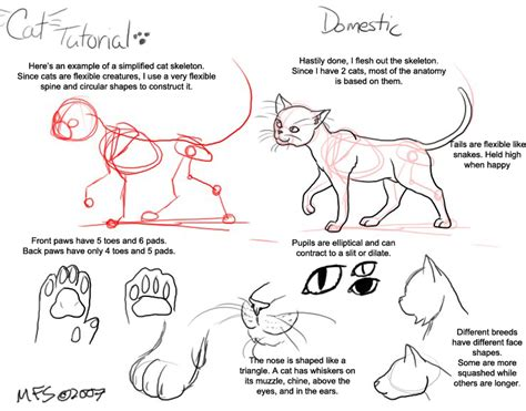 cat tutorial cat tutorial domestic by modesty on deviantart