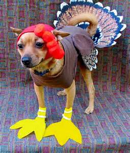 dogs thanksgiving here are 12 unamused cats and dogs dressed as turkeys