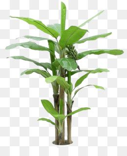 Green Leaf Renzo Basket 383 banana clip banana picture png