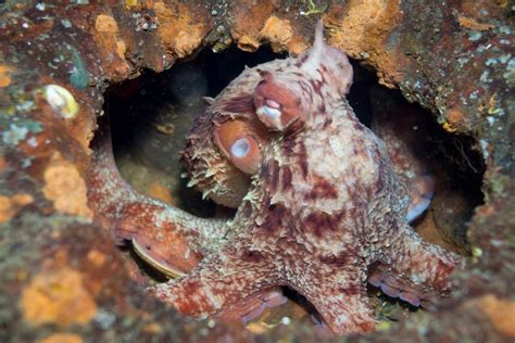 octopus color amazing facts about the octopus business insider