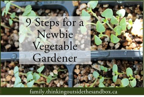 how to start a vegetable garden for beginners how to start a beginner vegetable garden tots family