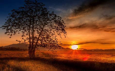 malaysia tree sunset wallpapers malaysia tree sunset
