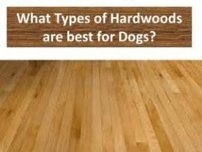 17 Best ideas about Types Of Dogs on Pinterest   Pets, Big