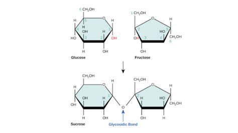 carbohydrates article carbohydrates article macromolecules khan academy