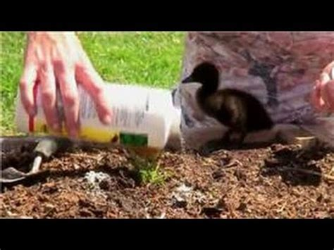 Vegetable Gardening How To Control Ants In Vegetable Ant In Vegetable Garden