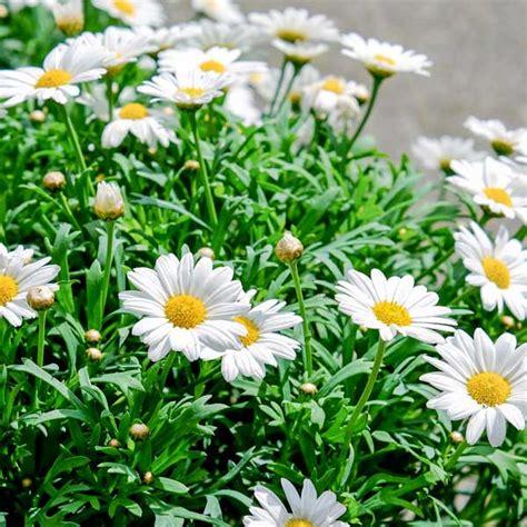 sementi fiori sementi fiori stagionali da interno ed esterno per il tuo