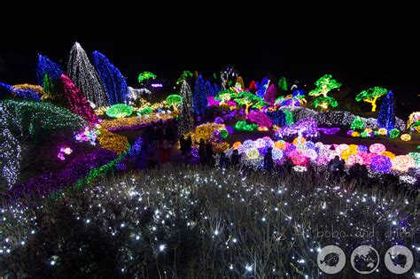 it s christmas at lighting festival seoul garden of the