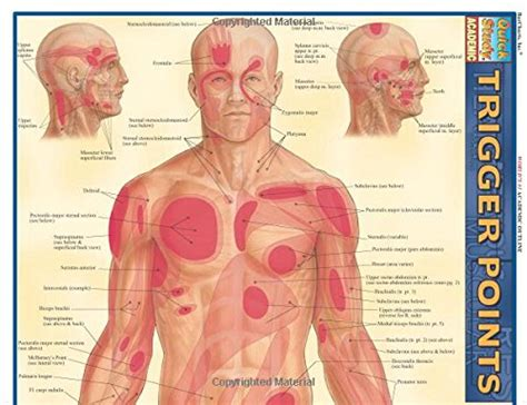 Pdf Trigger Points Quickstudy Inc Barcharts by Trigger Points Quickstudy Academic Import It All