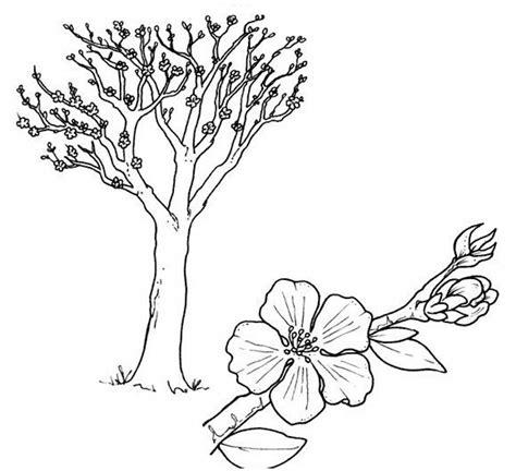 fiori di pesco da colorare albero di pesco disegni da colorare gratis disegni da