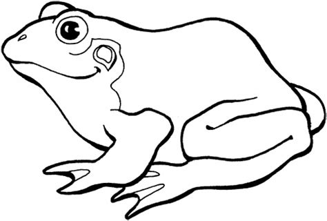 frog outline template clipart best
