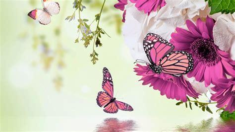 imagenes de rosas y mariposas bellas mariposas y flores de colores fotos e im 225 genes en fotoblog x