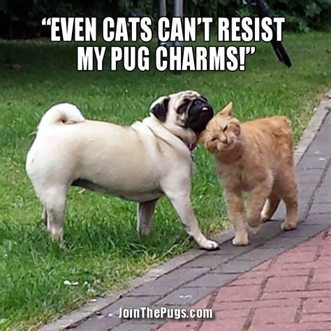 you pug join the pugs gt pug charms