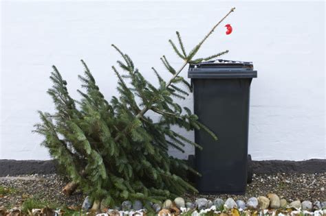 homeowners insurance and dead trees 16 uses for a dead christmas tree