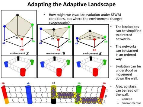 Landscape Definition In Biology Adaptive Landscape Biology Definition 28 Images