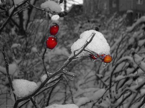 Poster Schwarz Weiß Mit Farbe by Schwarz Wei 223 Farbe Rot