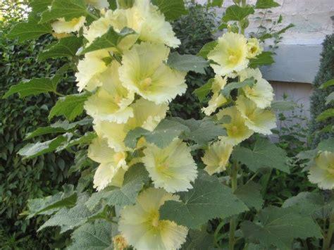 Fall Garden In Texas - http 1 bp blogspot com 8ckr2waq4ee tfmhyx5avii aaaaaaaafzs pxhzy izrg s1600 201120 2b095 jpg