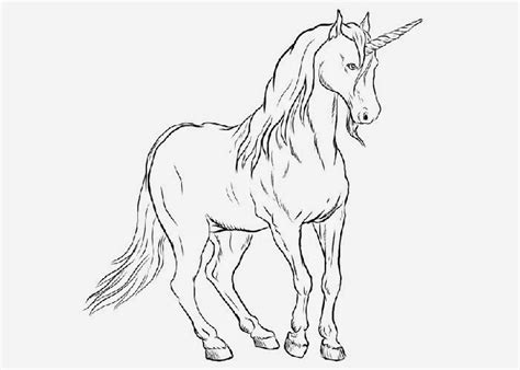 coloring books for unicorn coloring books for the really best relaxing colouring book for 2017 my gorgeous pony ages 2 4 4 8 9 12 adults books unicorn coloring page free coloring pages and coloring