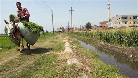 ancient egyptian river   revived  farming