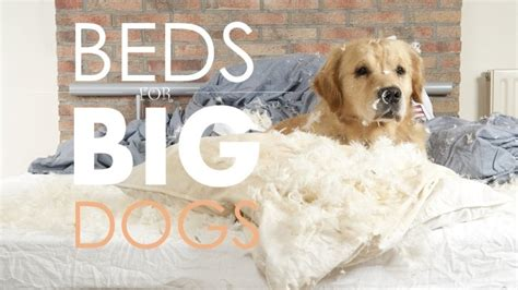 best dog beds for large dogs best dog beds for large dogs guide recommendations