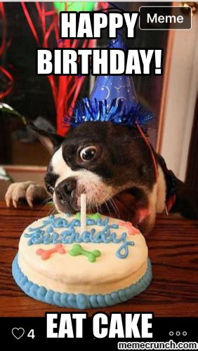 Happy Birthday Cake Meme - birthday dog