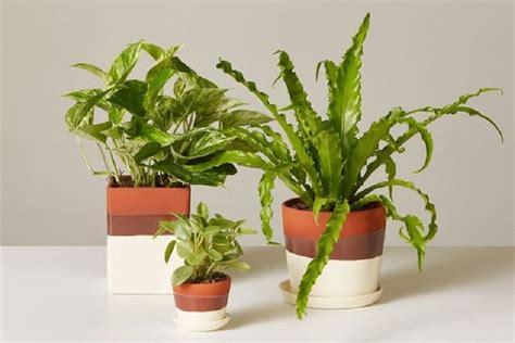 tanaman  bisa menjaga suhu ruangan tetap sejuk kompascom