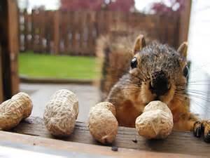 ellie garratt wip update a squirrel called brian rusty