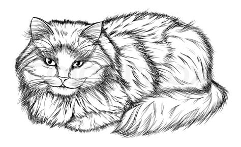 lying cat black and white pencil drawing vector colourbox
