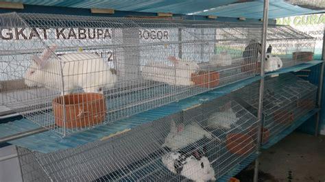 Kandang Kelinci Ayam tipe tipe kandang kelinci alam tani