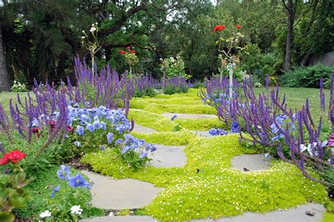 low maintenance ground cover and lawn alternatives