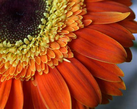 Thanksgiving Flowers by Thanksgiving Flowers