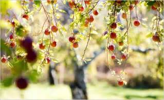 Cheap Flowers Delivery Dream Wallpapers Apple Orchards In New York