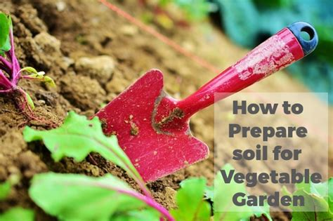 how to prepare soil for vegetable garden scrapality