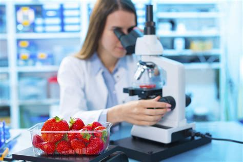 food technology food technology