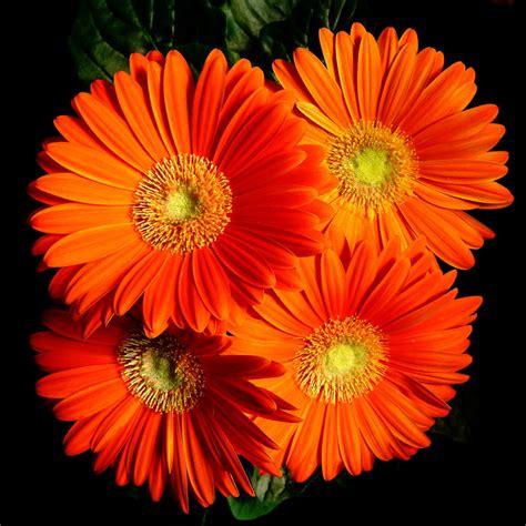 a flower for sharon by dieffi on deviantart