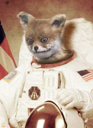 Stoned Fox Meme - stoned fox meme memes