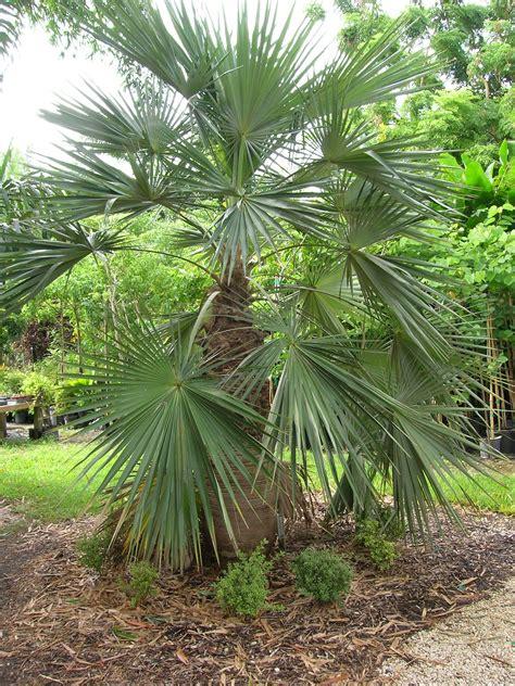 1000 images about palmen on l wren the
