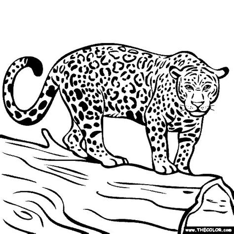 coloring pages jaguar animal 1000 images about places to visit on coloring