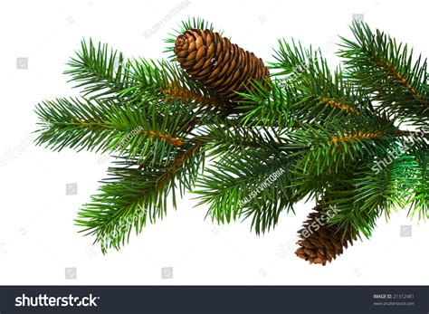 branch christmas tree on white stock photo 21312481