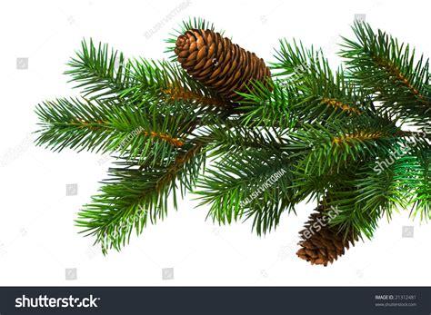 branch christmas tree on white stock photo 21312481