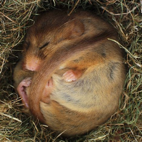 imagenes de animales que hibernan come e perch 232 del letargo una sorprendente necessit 224