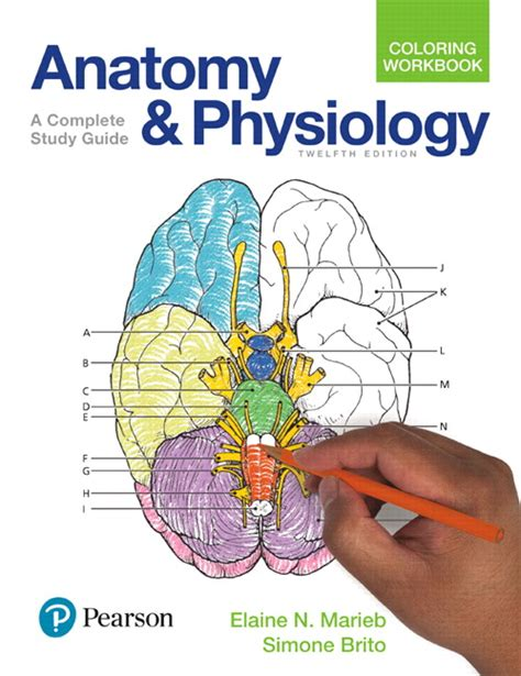 anatomy physiology coloring workbook answers nutrition and metabolism marieb brito anatomy and physiology coloring workbook