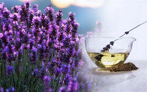 Garden Aromatherapy What Is Lavender The Garden Of Eaden