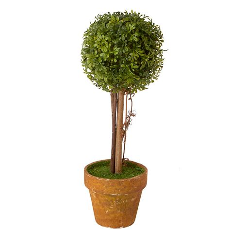 small boxwood ball topiary plant table decor home decor