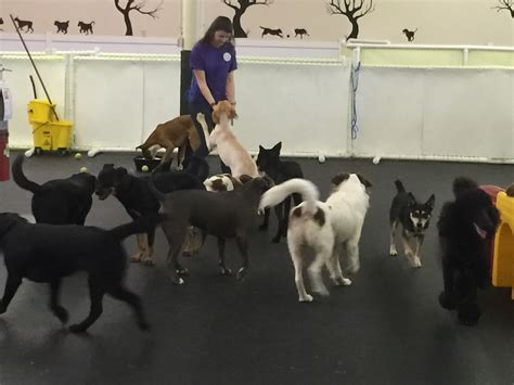 day care for puppies daycare happy hound resorts