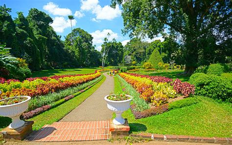 Botanical Garden Kandy Visit Lanka Pvt Ltd Tour Operator