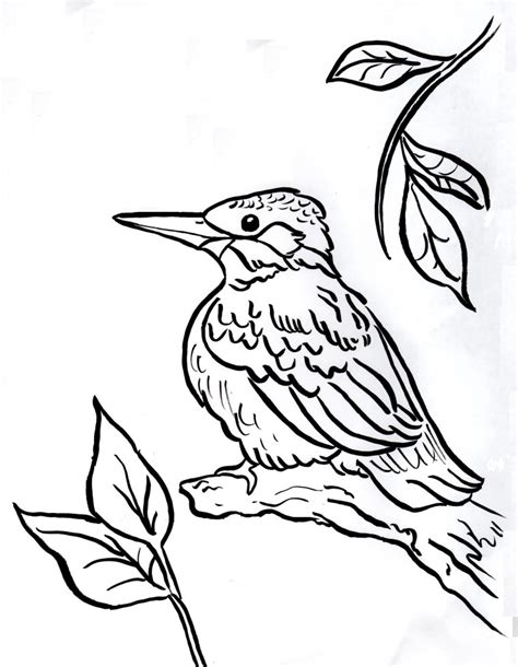 kingfisher coloring pages kingfisher coloring page coloring pages