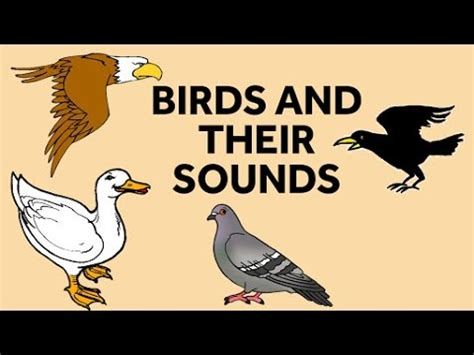 learn birds names and their sounds birds sounds for kids