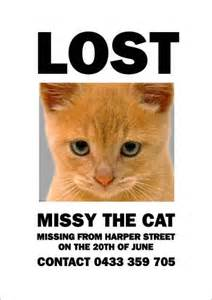 lost cat poster template grind my gears missing tuxedo cat email chain